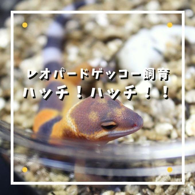 ハッチ!ハッチ!!