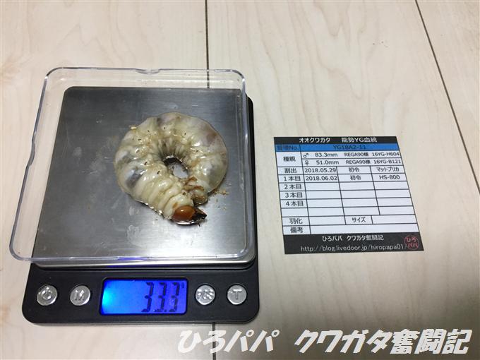 YG18A2-11 (3)