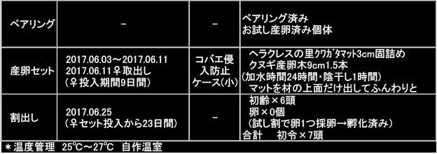 能勢YG 2017 Bライン