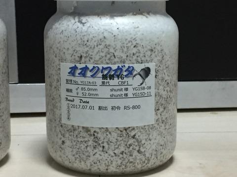 2017 能勢YG 割出 (15)