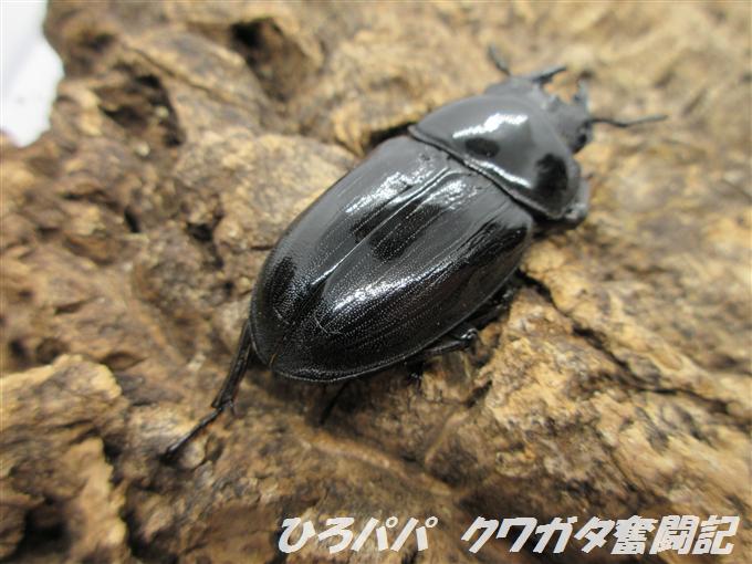 YG18A3-05 (3)