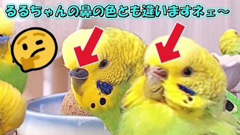 ナゾめいた ららちゃん あなたは?。。.jp