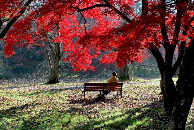 弘前公園西の郭
