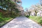 【2017年5月1日】弘前さくらまつり写真