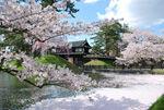 【2017年4月28日弘前さくらまつり写真】
