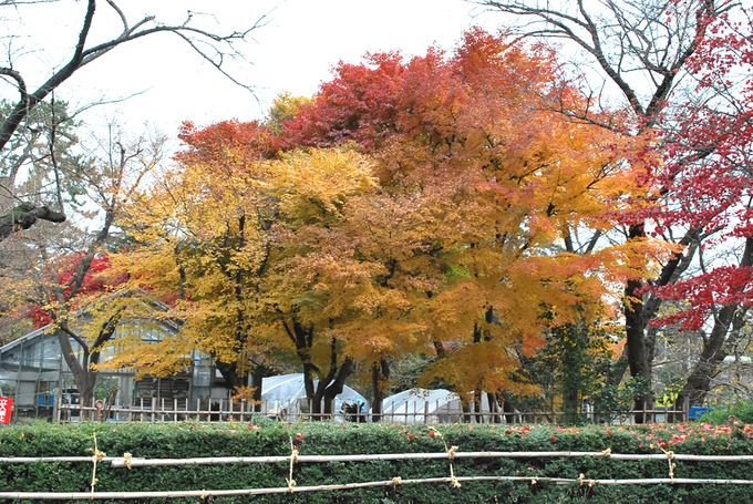 弘前公園緑の相談所付近
