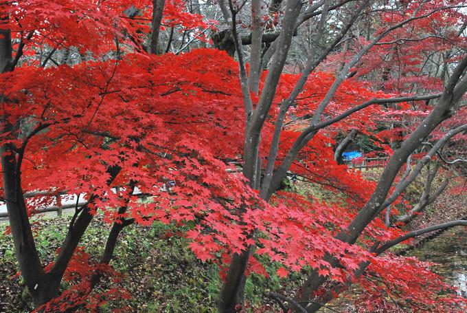 弘前公園東内門付近
