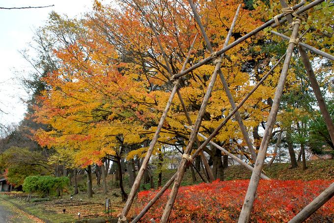 弘前公園植物園内