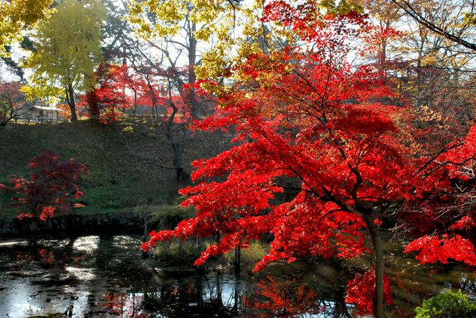 弘前公園蓮池付近