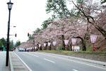 【2016年4月19日】弘前さくらまつり写真