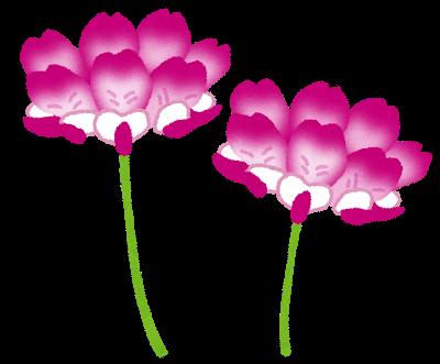 flower_renge