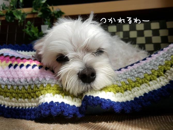 [画像:00880151-s.jpg]