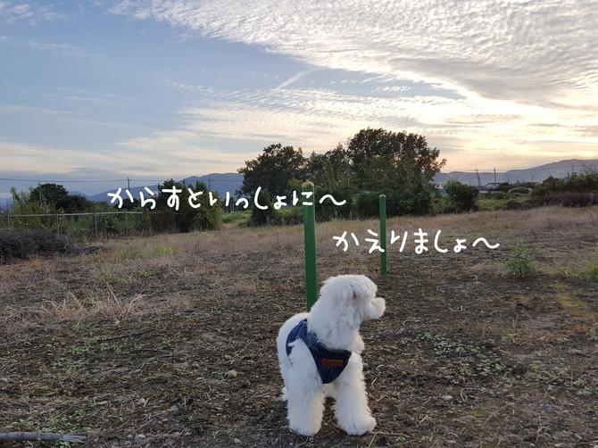 [画像:19da1fb3-s.jpg]