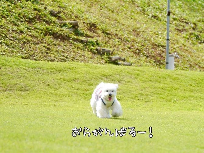 [画像:2572c1c9-s.jpg]