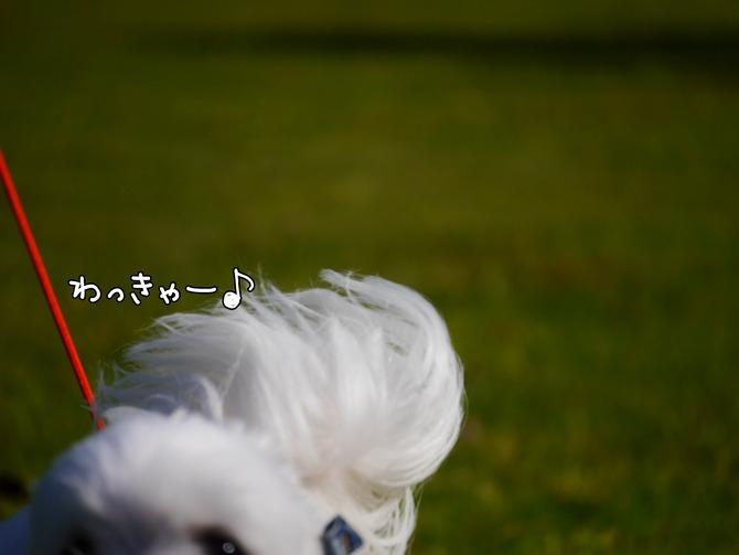 [画像:4a81a509-s.jpg]