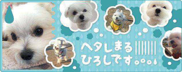hiroshi_mv.jpg