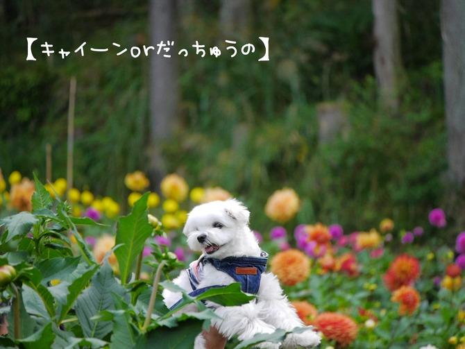 [画像:8ebe1fda-s.jpg]