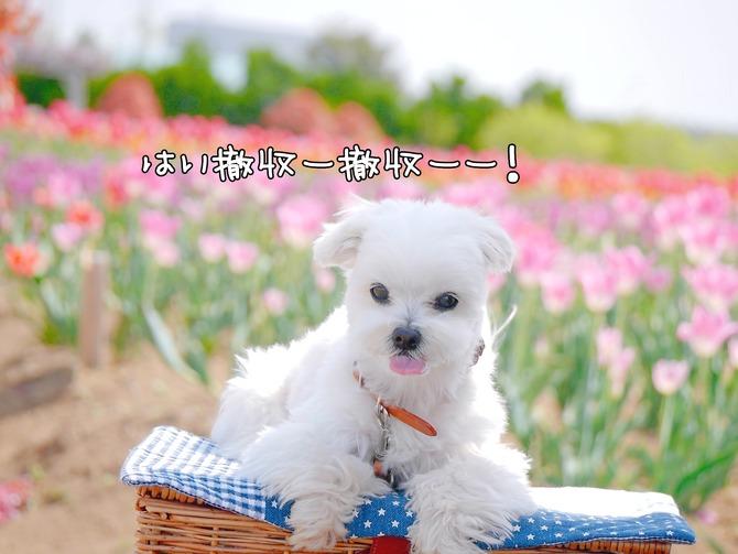 18-04-17-00-59-12-777_deco