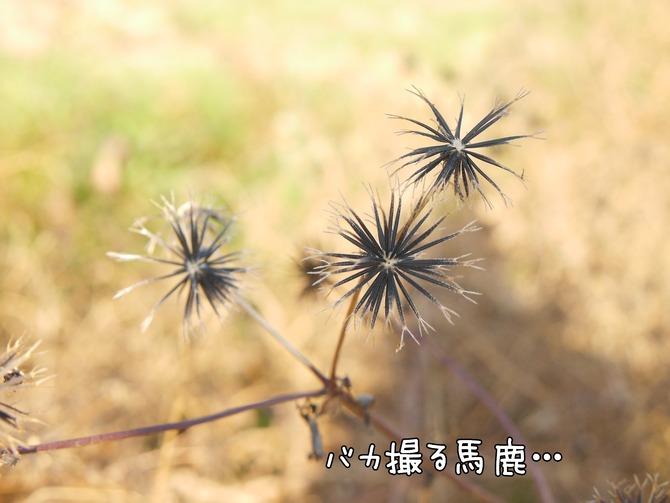 [画像:e7f78958-s.jpg]