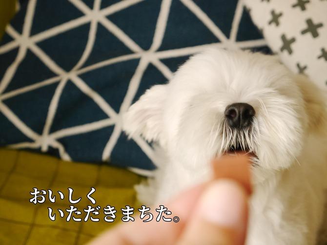 [画像:f1c7167c-s.jpg]