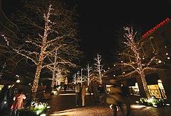 街路樹のライトアップ