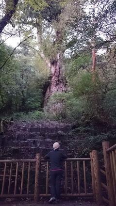 04147a598b 10月の屋久島です。 「どうしても屋久島に行きたい。縄文杉を見たい。それも、せっかく行く のなら、自分のペースで、気兼ねせず、ゆっくり屋久島を楽しみたい。」