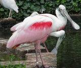 なんて名前の鳥でしょう?