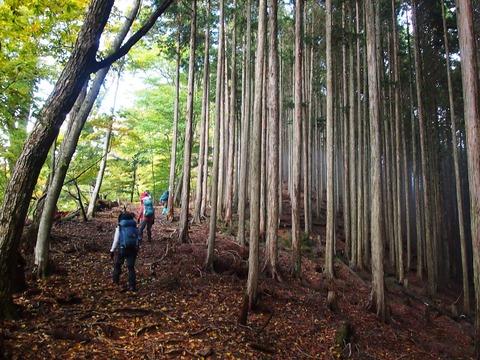 38 山頂周辺にも植林帯。