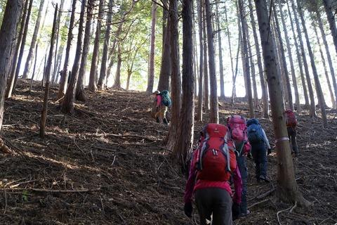 099 植林帯のジグザグ登り。