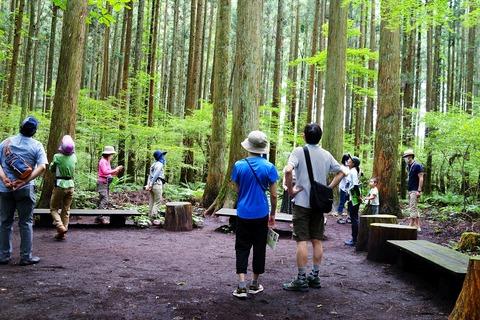 135 杉の森で解説を聞く。