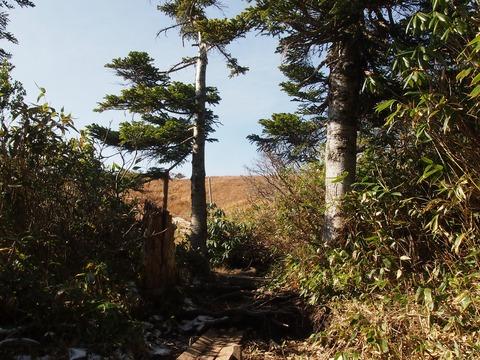 090 田代山湿原はもうすぐ。