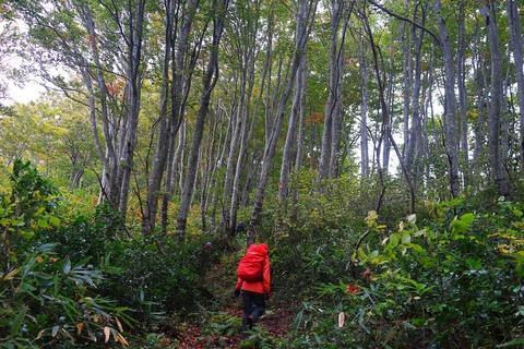 022 高木はほぼ全てブナ。