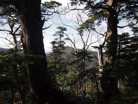 108 木々の間から帝釈山