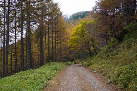 065 落葉松の林を過ぎて・・・