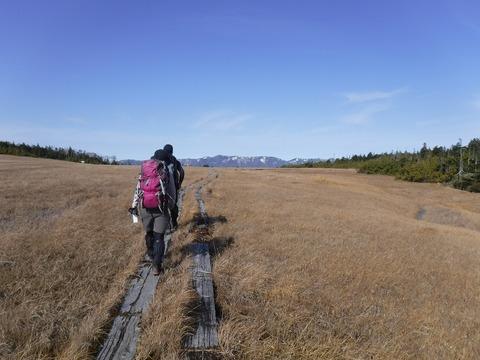 095 気持ちが良い湿原歩き。