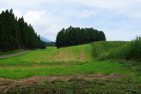 137 牧草地と玉蜀黍畑。