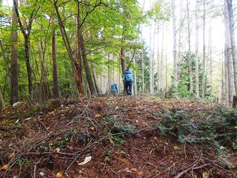 29 落葉松林は明るい。