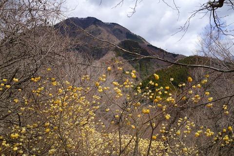 18 奥の山は箒沢権現山。