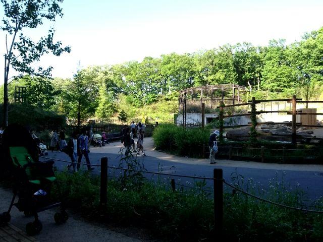 GW毎年恒例の多摩動物公園へ行ってきた。