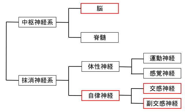 基礎心理学(1)(� 脳・神経)【Ver.2.0】