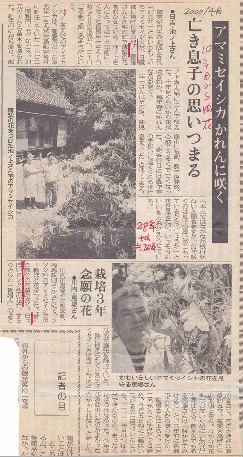 アマミセイシカ新聞-2