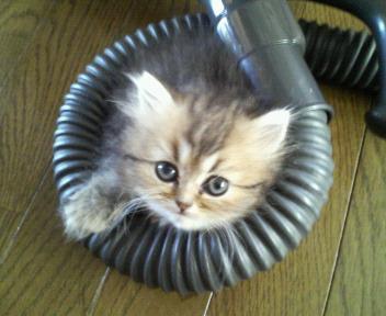 掃除機好き。