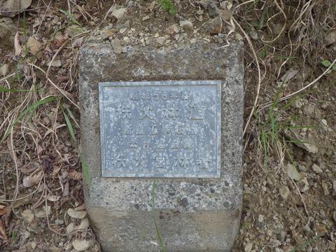 IMGP3235