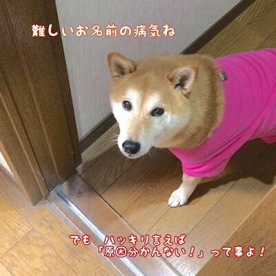 性 疾患 突発 前庭 【犬の前庭疾患】全ての原因を網羅。獣医師が解説します。