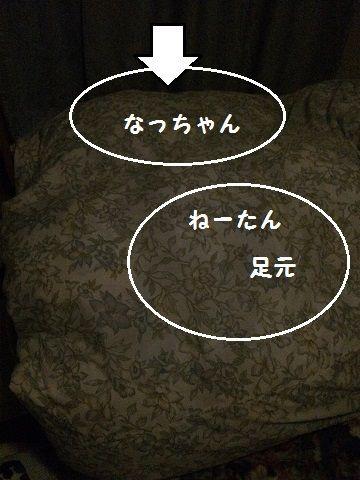 IMG_55531
