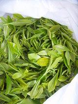 茶摘み;新芽