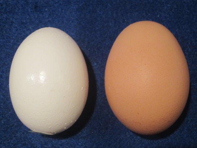 鶏卵の画像 p1_26