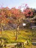 梅林公園110223