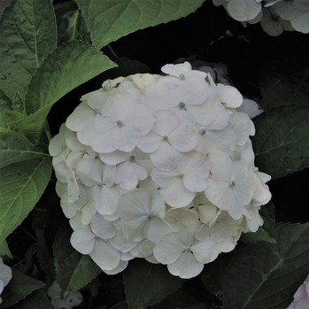 白→水色�