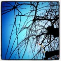 青空と枯れ枝